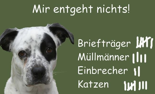Fahndung klassisch per Hund, digital per Precrime-Software